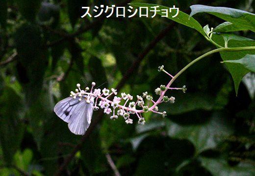 IMG_9978_.jpg