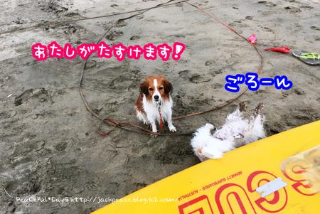 170709_umi3.jpg