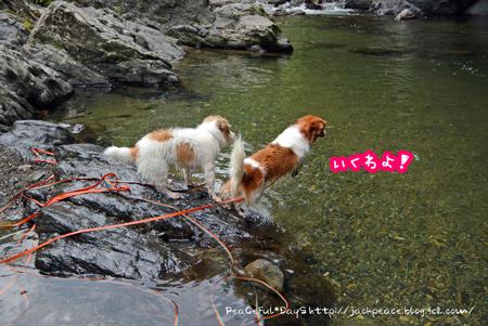 170802_tamagawa6.jpg