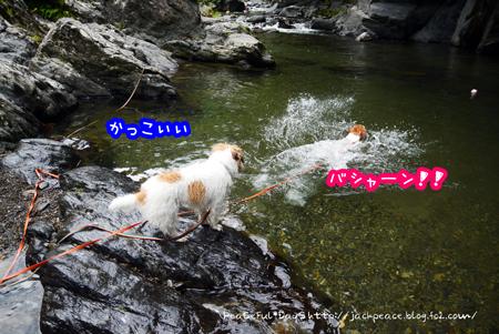 170802_tamagawa7.jpg