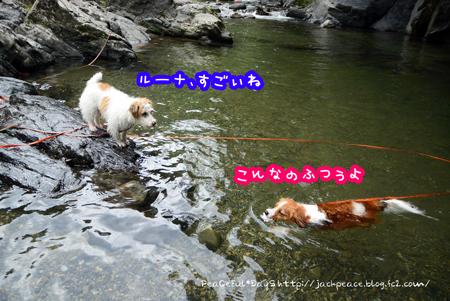 170802_tamagawa9.jpg