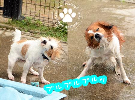 170812_yuasa7.jpg