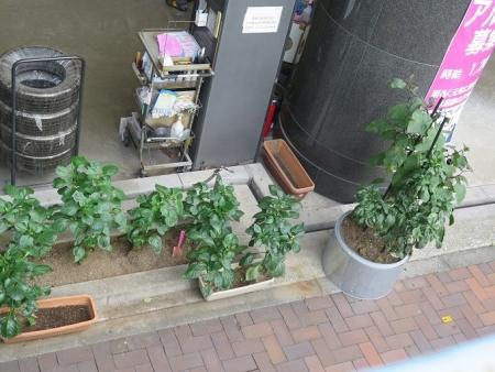 東京の茄子とピーマン