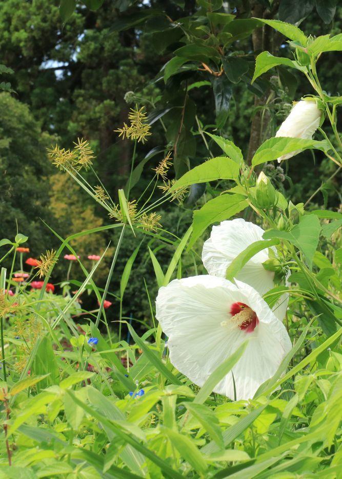 ●Sガリバー2017・9・4雪国植物園_97