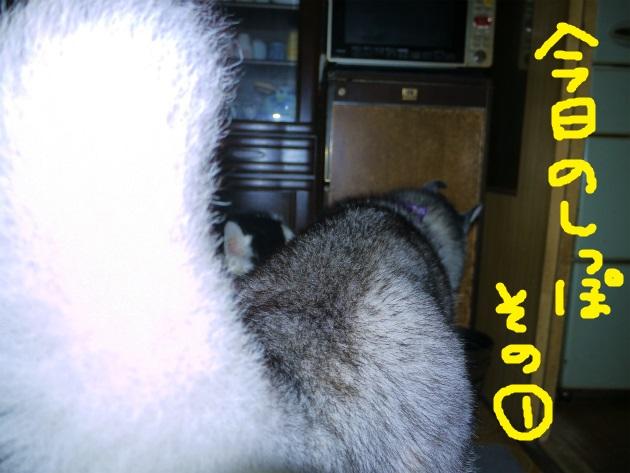 P2160577.jpg