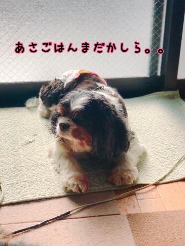 fc2blog_20190101194813ff9.jpg