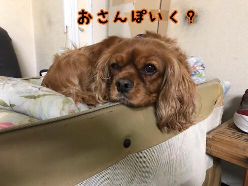 fc2blog_2019011922093889e.jpg