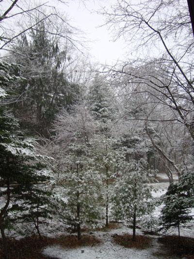 20081124-4.jpg