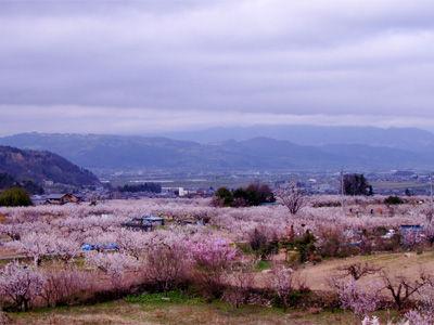 20100411-1.jpg