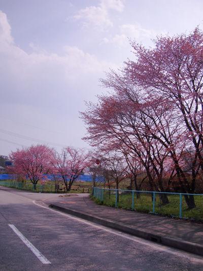 20100505-3.jpg