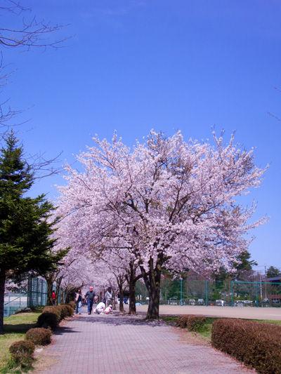 20100504-2.jpg