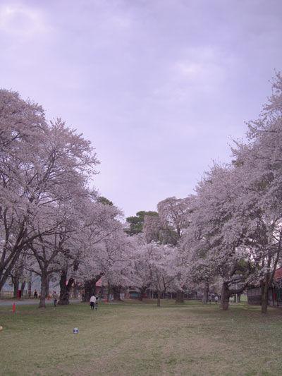 20110502-2.jpg