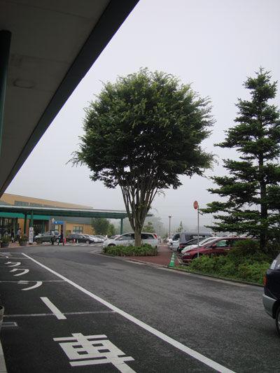 20110731-2.jpg