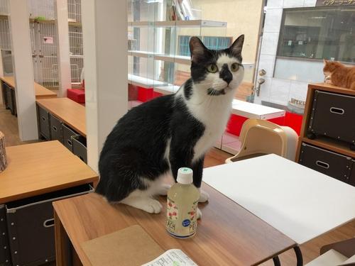 3猫カフェ①