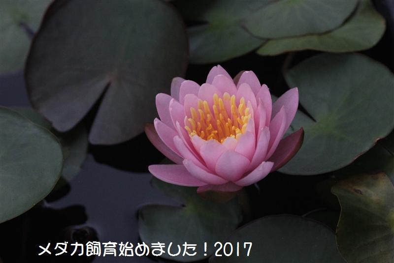 IMG_5327.jpg