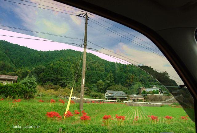 syasounohiganbana640name.jpg