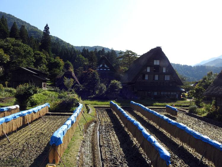 秋の旅行は、歴史・文化・食・風情ある合掌造りなどが楽しめる飛騨白川郷へ2