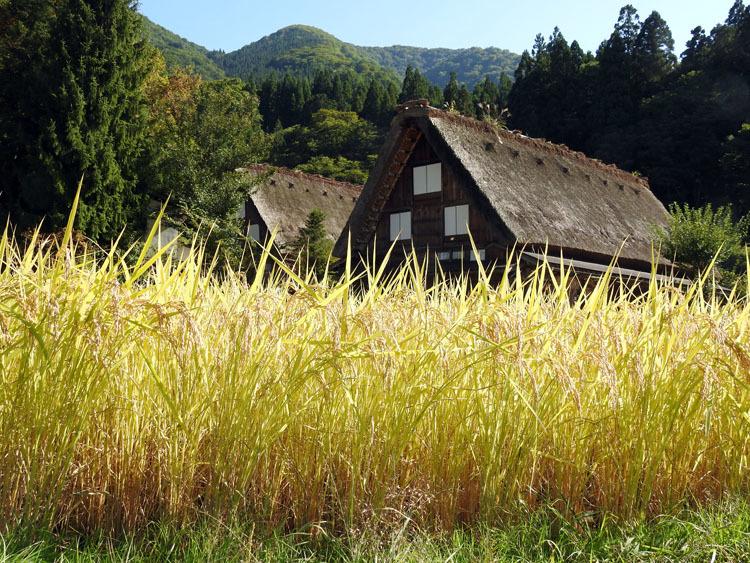 秋の旅行は、歴史・文化・食・風情ある合掌造りなどが楽しめる飛騨白川郷へ8
