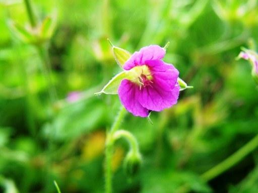 04_120908_晩夏の花