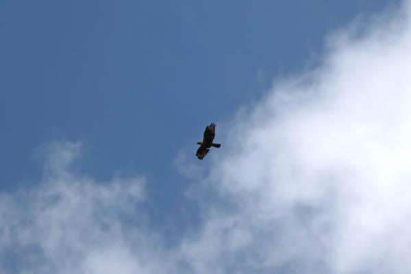 kimsbird13426.jpg
