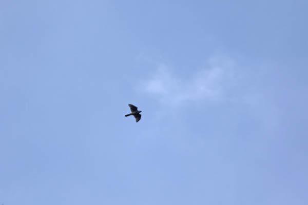 kimsbird13432.jpg