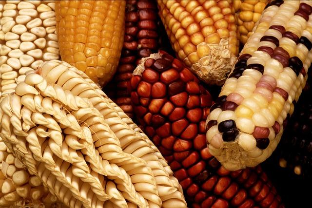 corn-63061_640.jpg