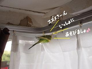kobuta9-2.jpg