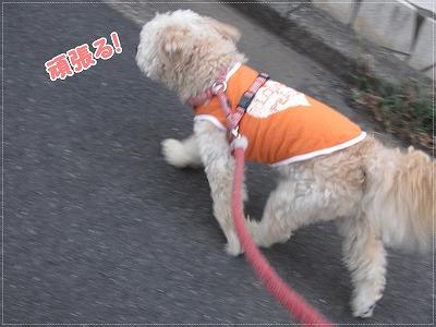 夕方のお散歩3