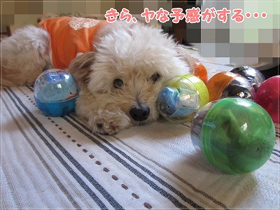 わんちゃんのお店6