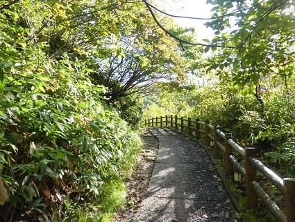 秋色散歩には