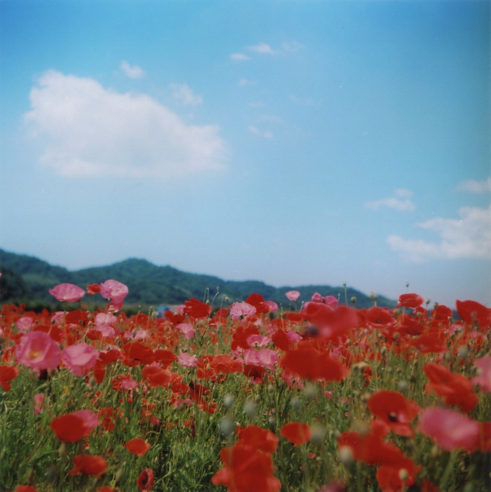 TOY-2318_Yashica.jpg