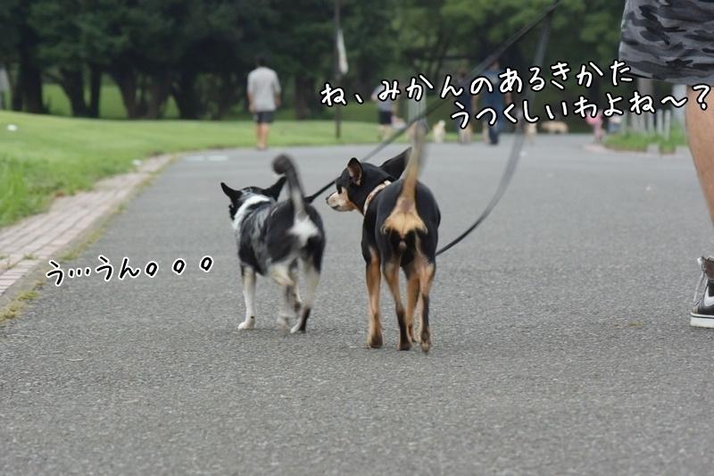 DSC_5665-20170811.jpg