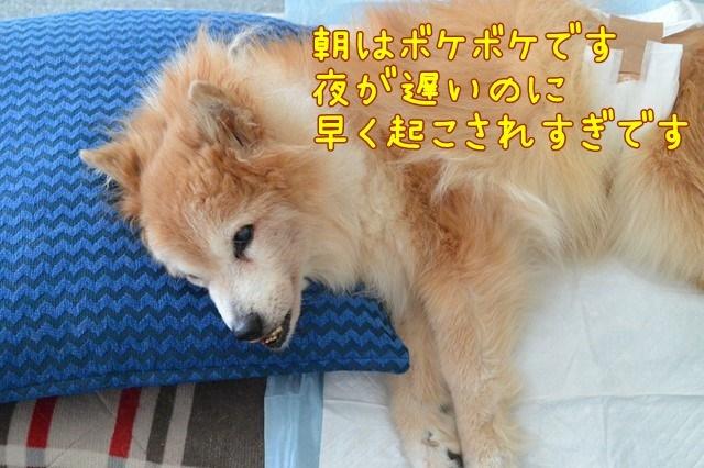 b-DSC_7043.jpg