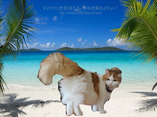 tropics-beach-palm-trees-sand.jpg