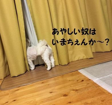 201707162059277ae.jpg