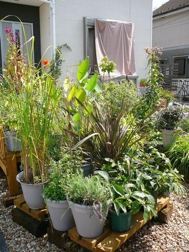 最近の作業と庭の様子