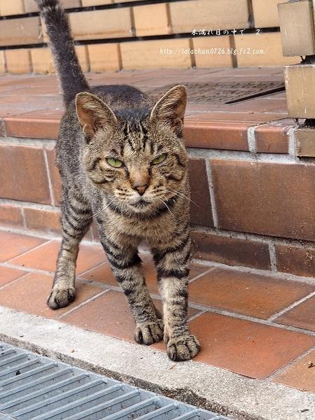 猫さん、来た