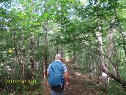 樹林の中の登山道