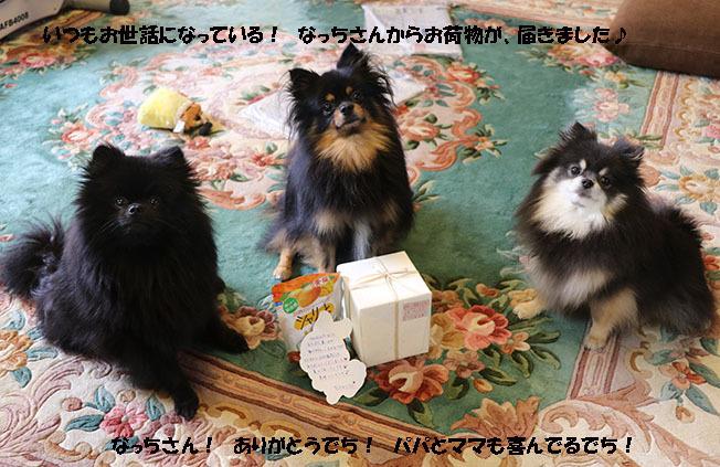 0A1A2115-987654567-987654.jpg