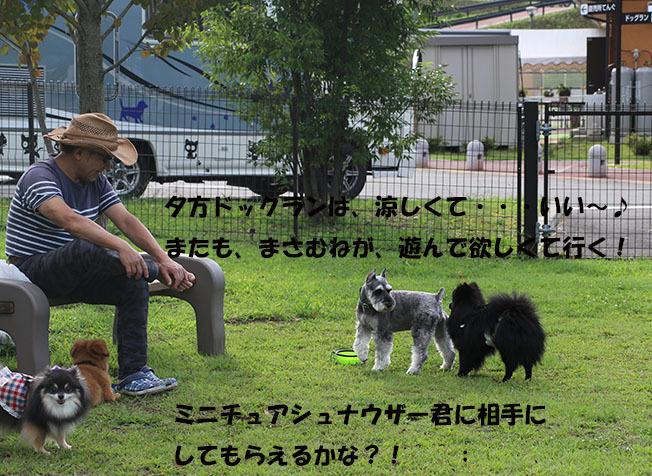 0A1A3156-987654567-987654.jpg