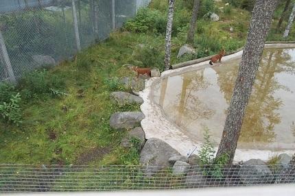 フィンランド 動物園 子供