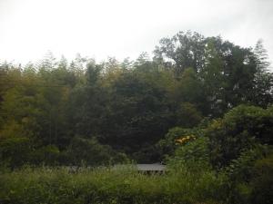 170923山栗と屋根