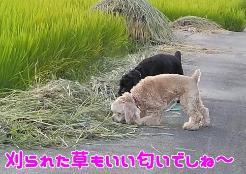 刈られた草も