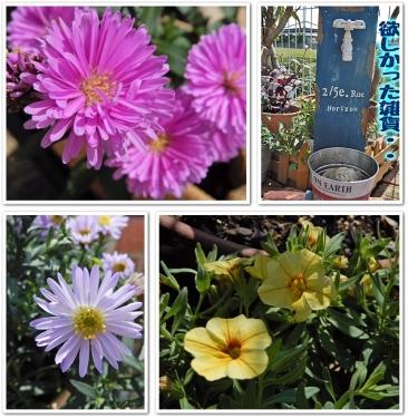 植えた花も