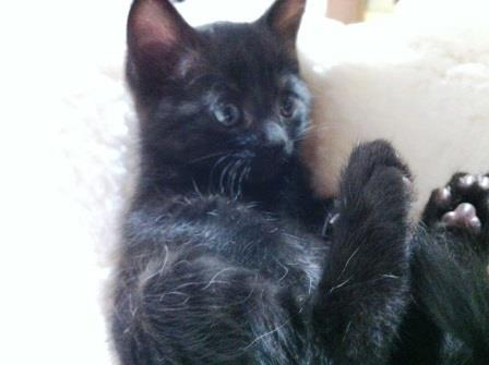 黒猫ちび1