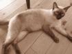 わが家の愛猫