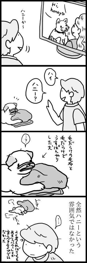 t423ハニーa