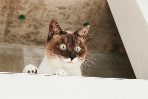 上からチェックする猫
