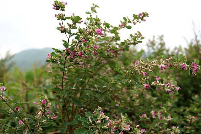 IMG4402JPGハギの花