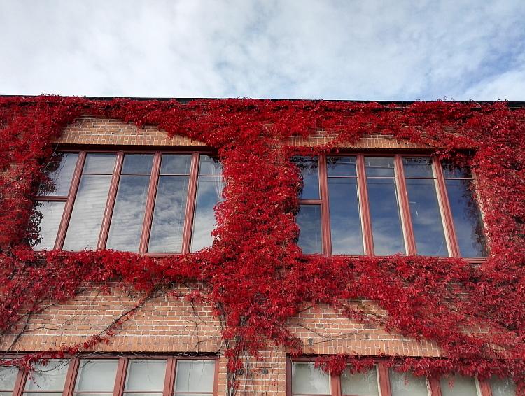 フィンランド 赤い紅葉